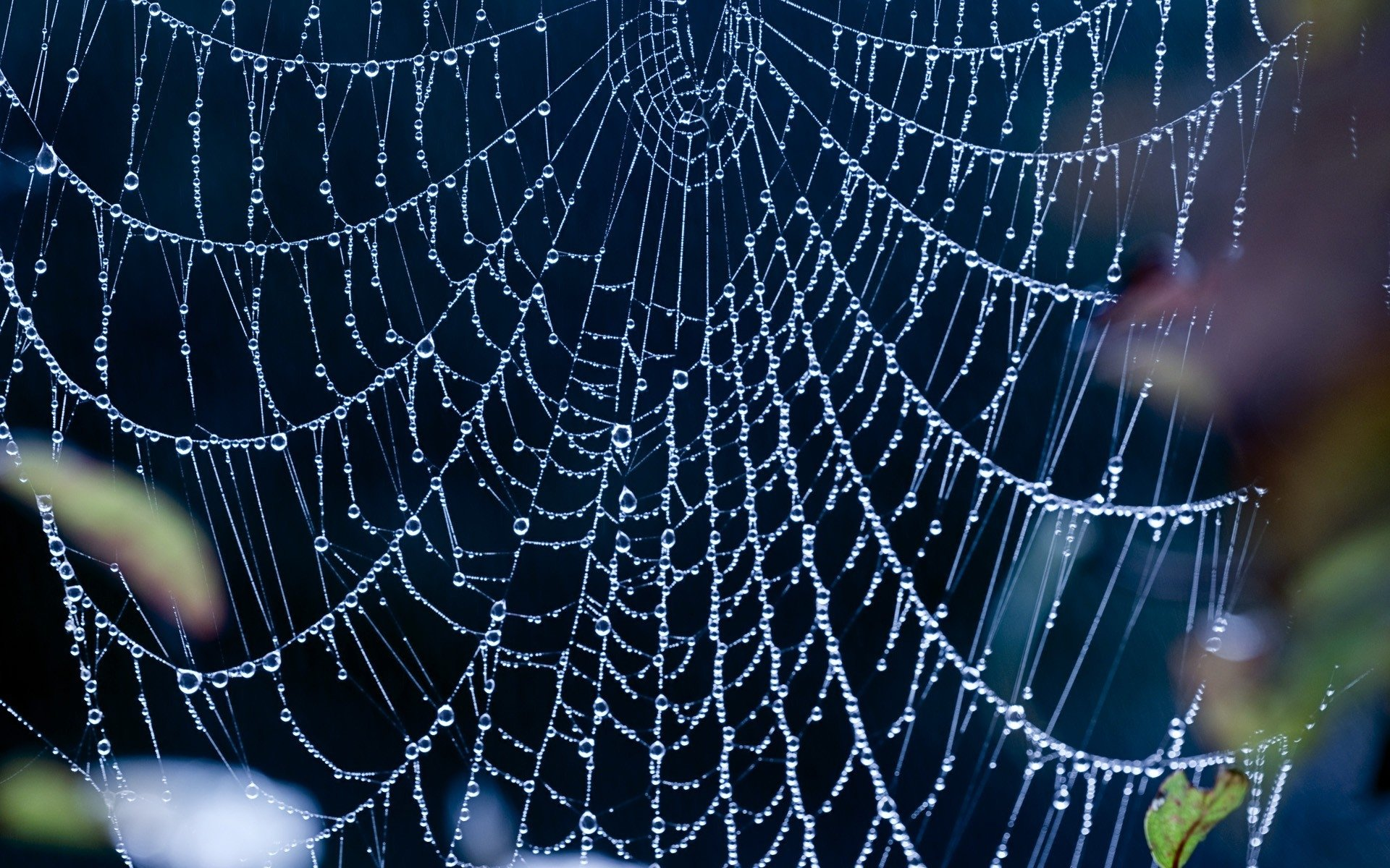 1600451866spider-web-background.jpg